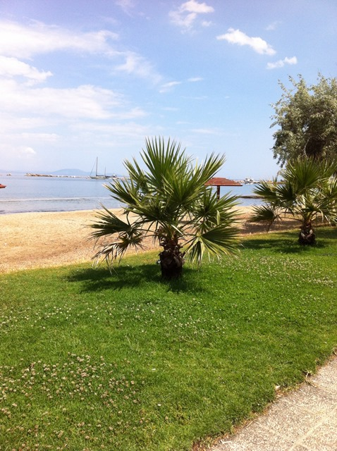a little palm tree on a lawn next to a sandy beach